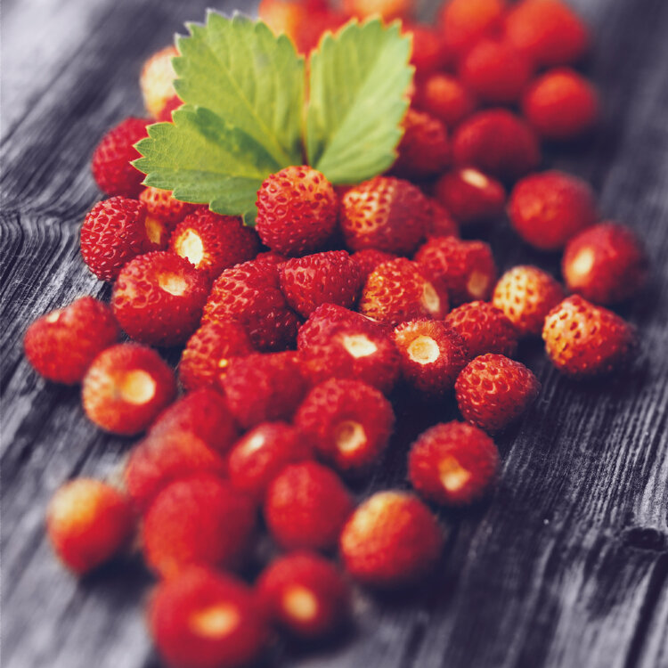 Plazma White Wild Strawberry 42gr